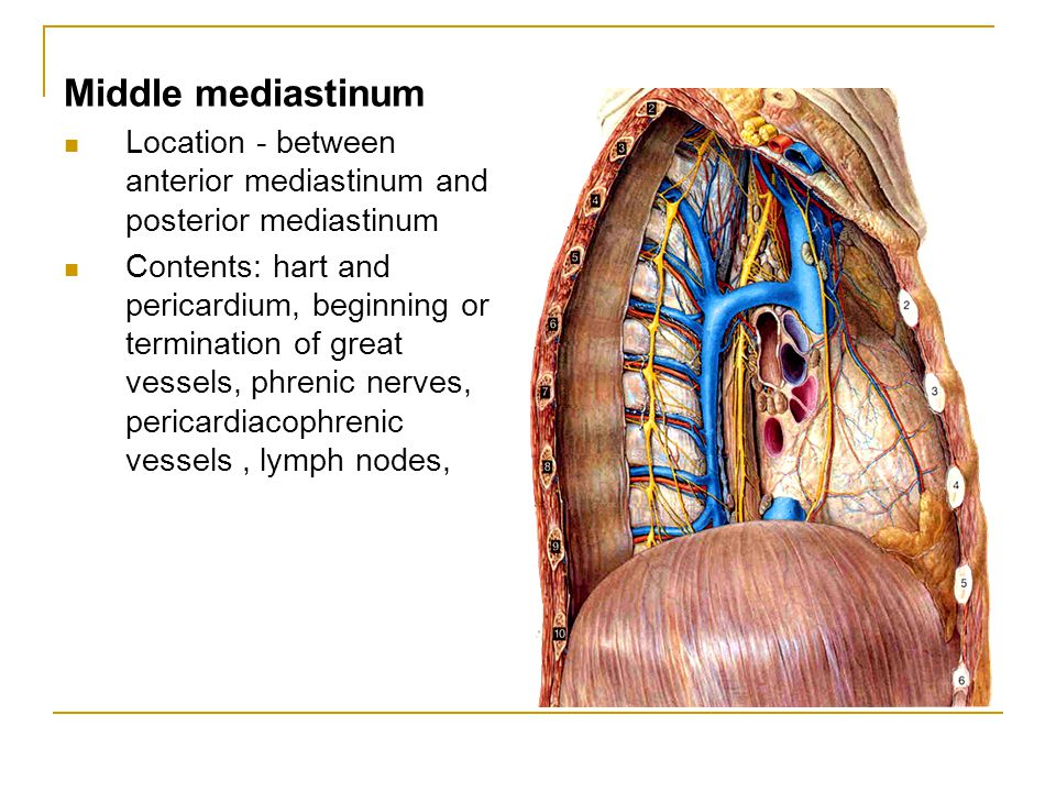 Middle mediastinum Location - between anterior mediastinum and posterior mediastinum.