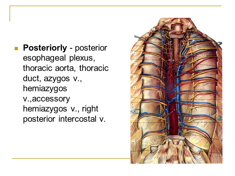 Posteriorly - posterior esophageal plexus, thoracic aorta, thoracic duct, azygos v., hemiazygos v.,accessory hemiazygos v., right posterior intercostal v.