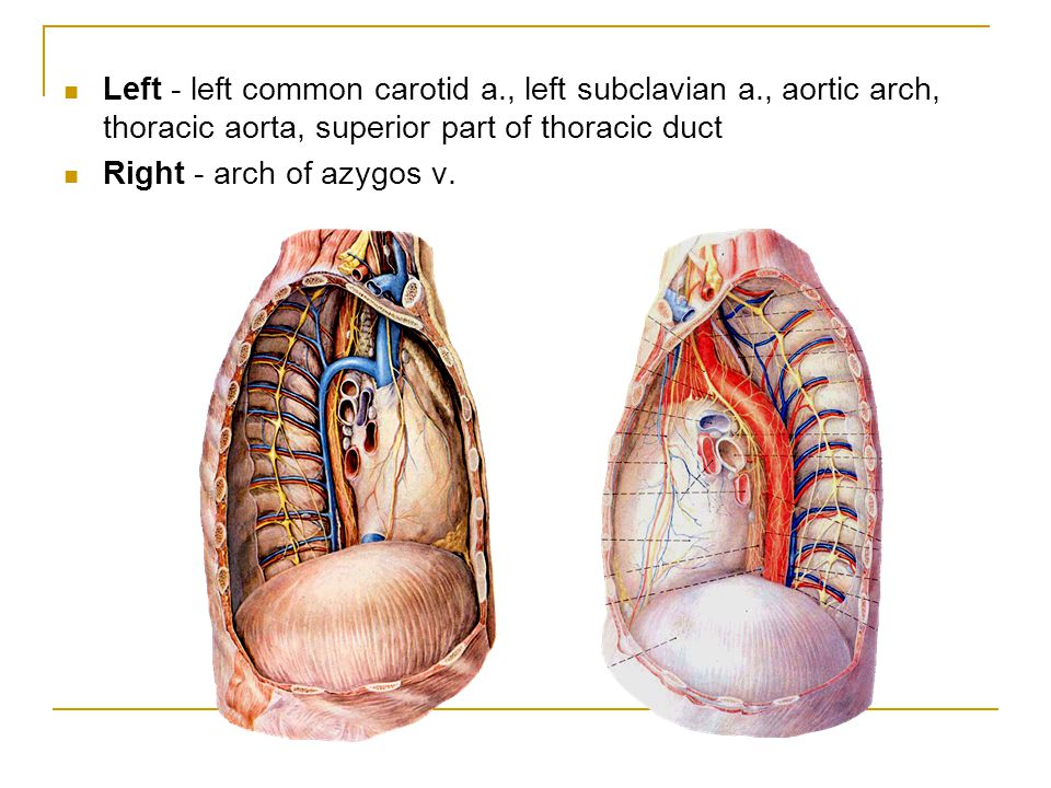 Left - left common carotid a. , left subclavian a