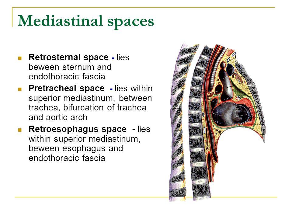 Mediastinal spaces Retrosternal space - lies beween sternum and endothoracic fascia.