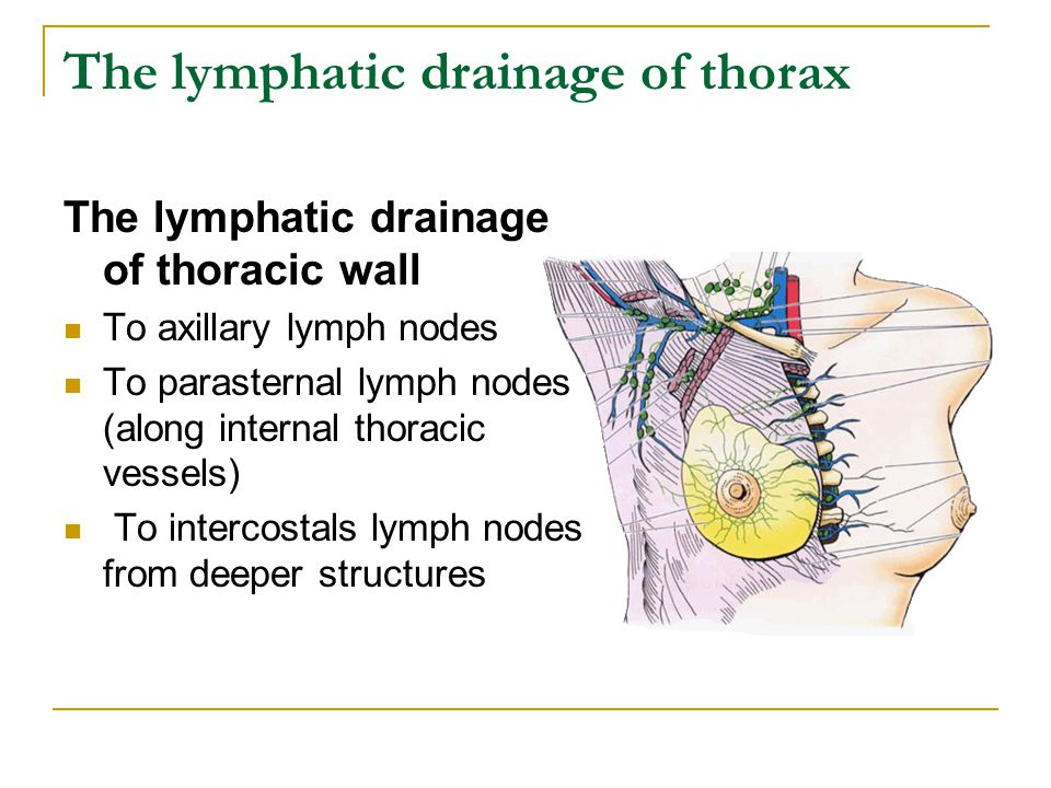 The lymphatic drainage of thorax
