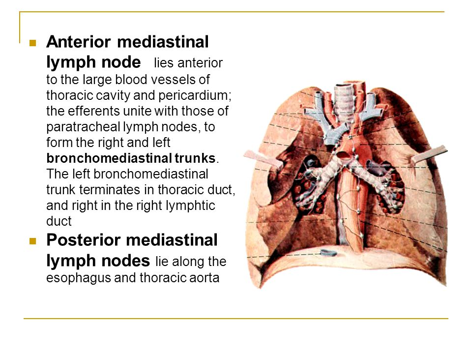 Anterior mediastinal lymph node lies anterior to the large blood vessels of thoracic cavity and pericardium; the efferents unite with those of paratracheal lymph nodes, to form the right and left bronchomediastinal trunks. The left bronchomediastinal trunk terminates in thoracic duct, and right in the right lymphtic duct