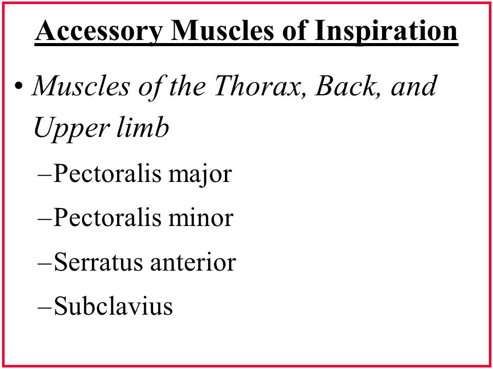 Accessory Muscles of Inspiration