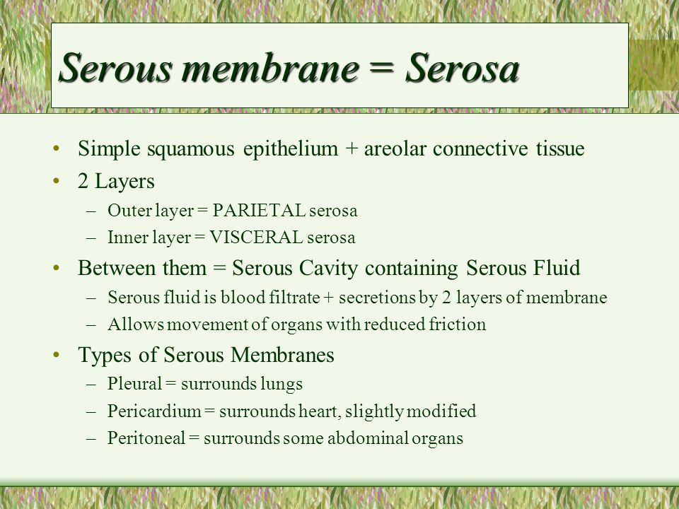 Serous membrane = Serosa