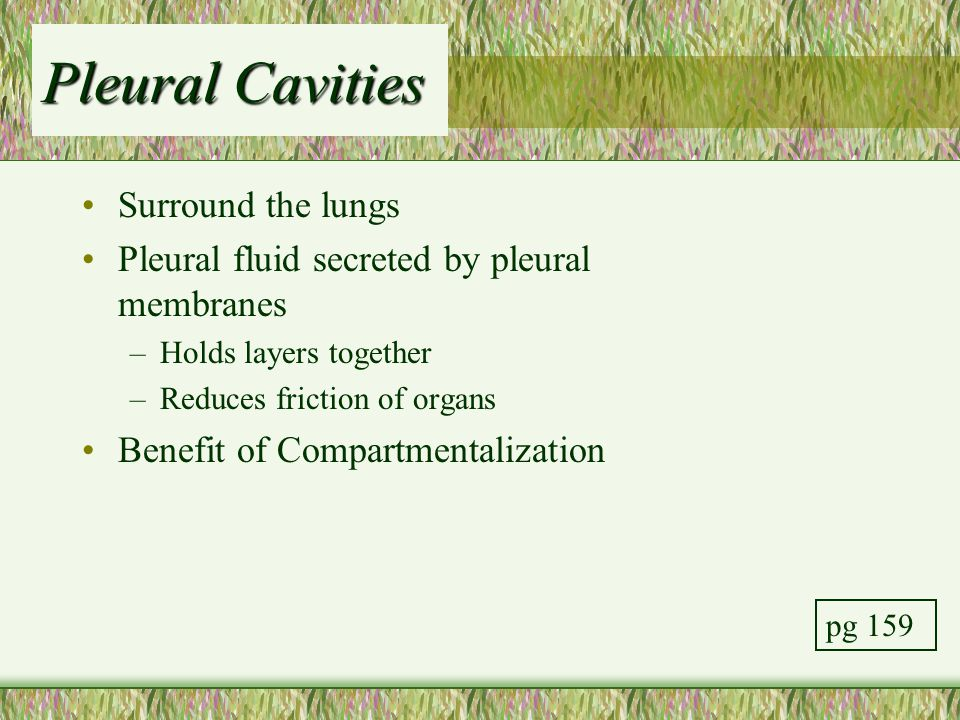 Pleural Cavities Surround the lungs