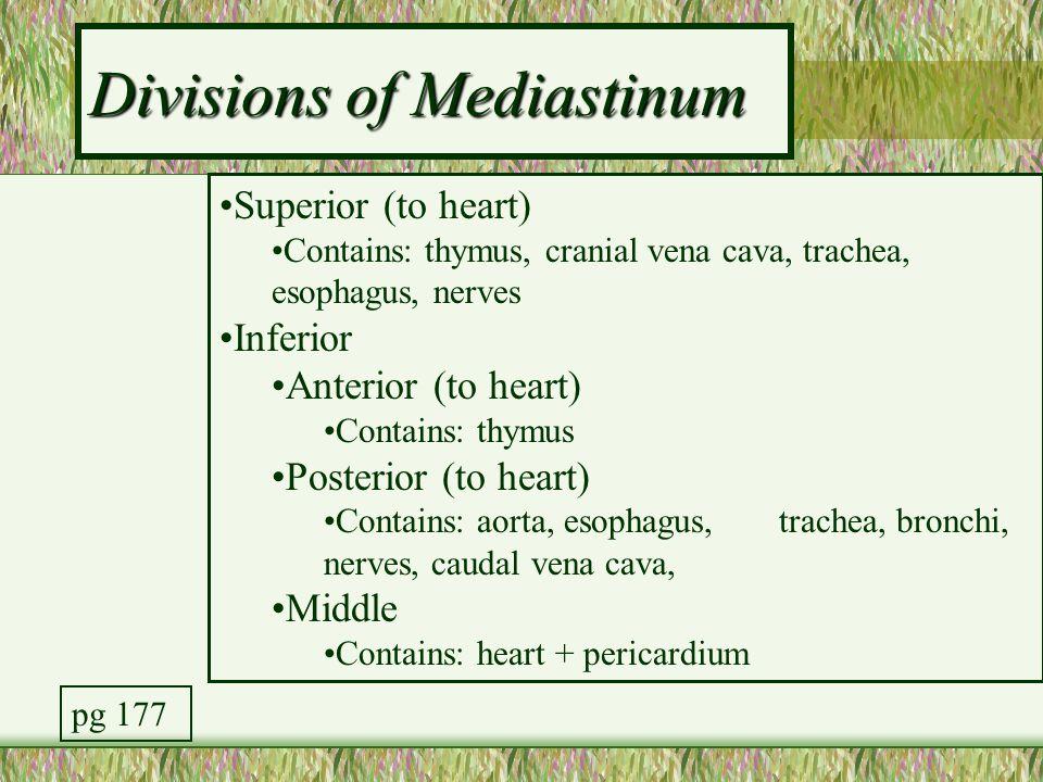 Divisions of Mediastinum