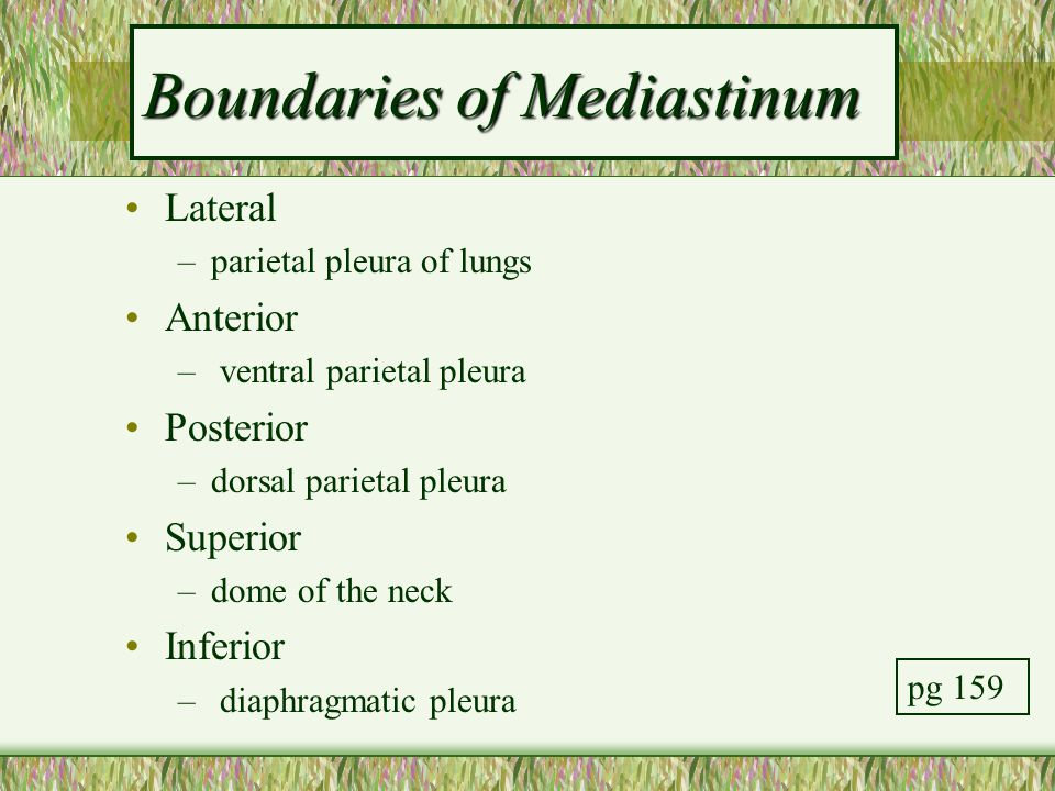 Boundaries of Mediastinum