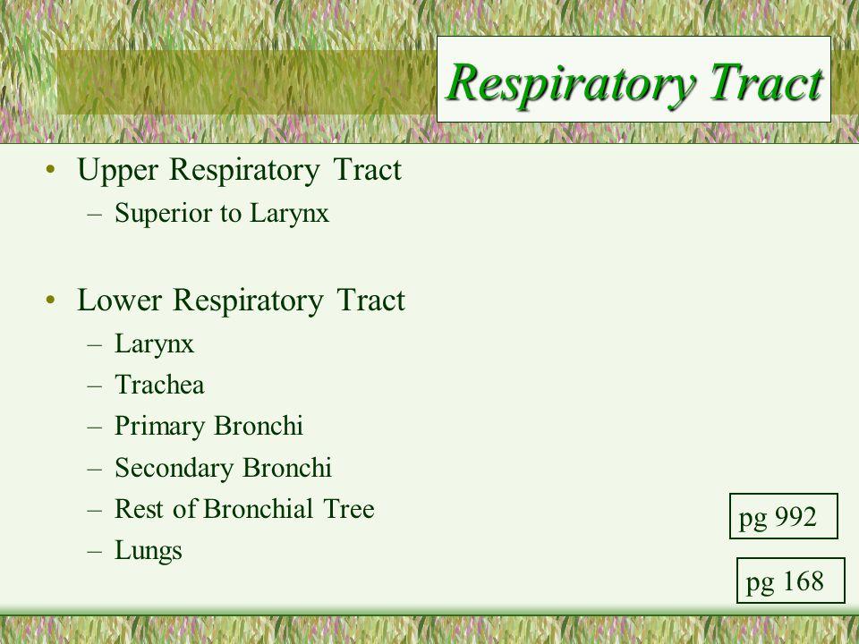 Respiratory Tract Upper Respiratory Tract Lower Respiratory Tract