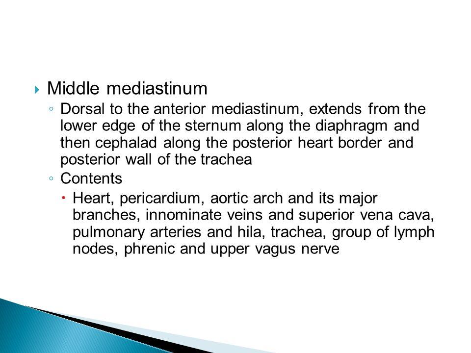 Middle mediastinum