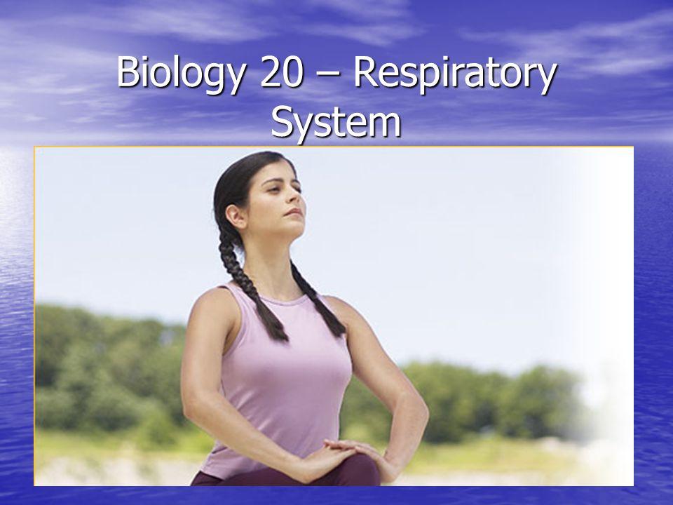 Biology 20 – Respiratory System