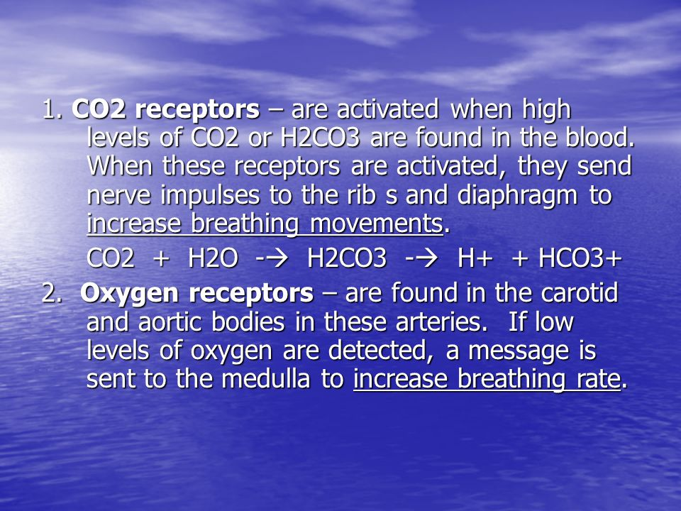 1. CO2 receptors – are activated when high levels of CO2 or H2CO3 are found in the blood. When these receptors are activated, they send nerve impulses to the rib s and diaphragm to increase breathing movements.