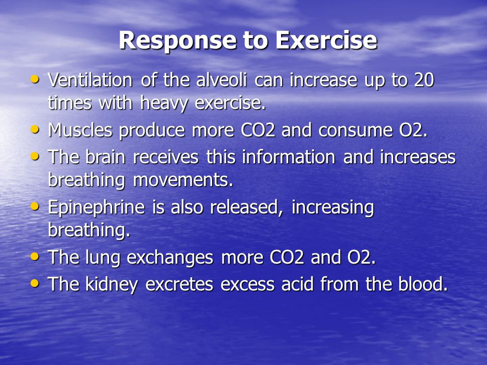 Response to Exercise Ventilation of the alveoli can increase up to 20 times with heavy exercise. Muscles produce more CO2 and consume O2.