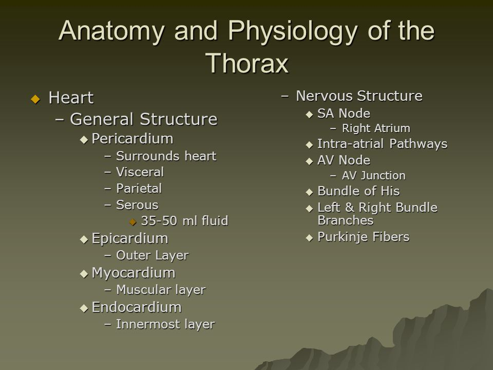 Anatomy and Physiology of the Thorax
