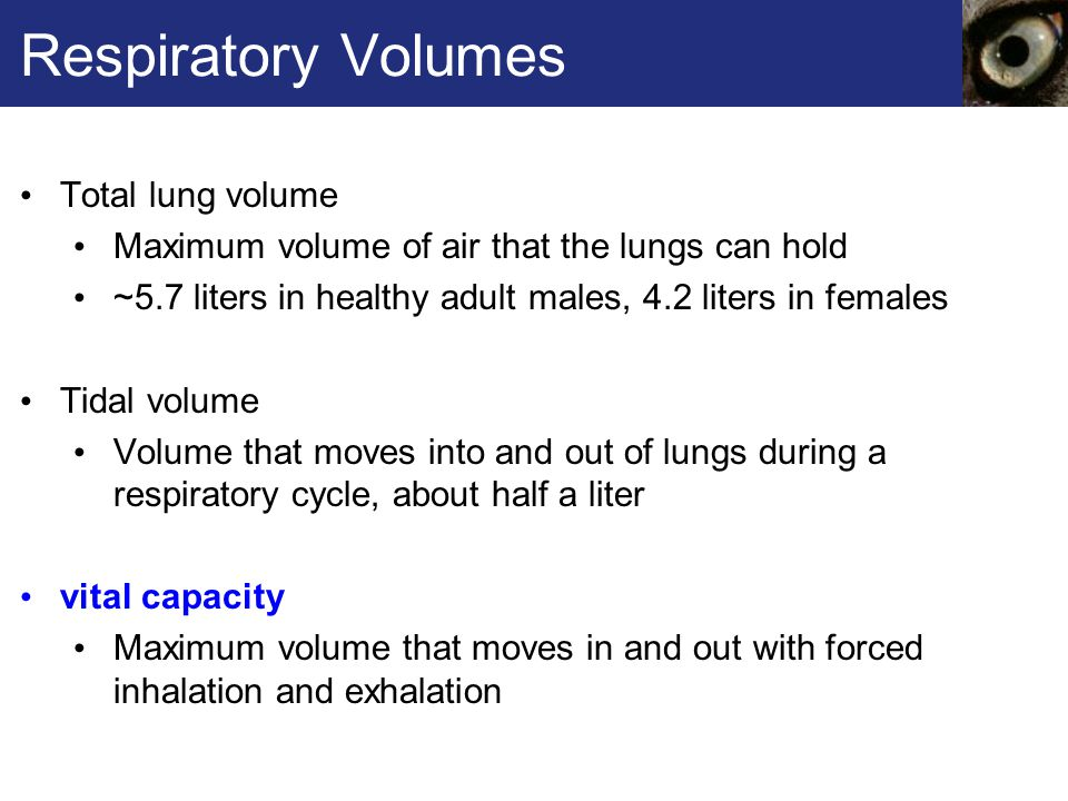 Respiratory Volumes Total lung volume