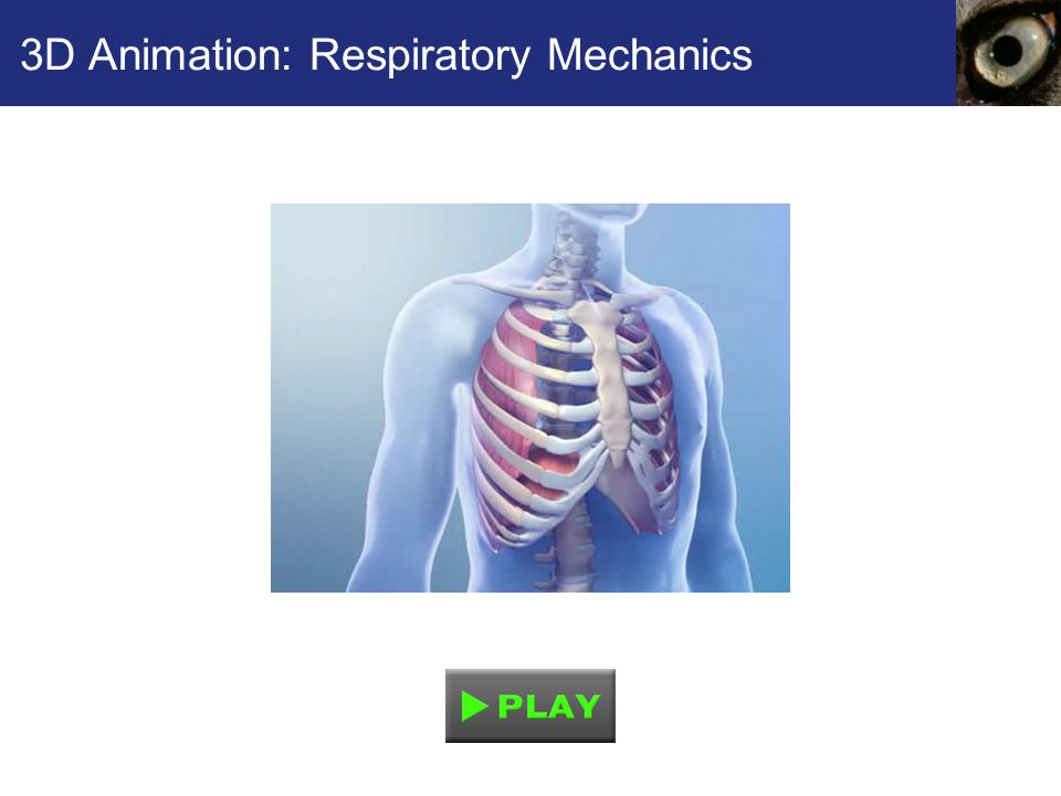 3D Animation: Respiratory Mechanics