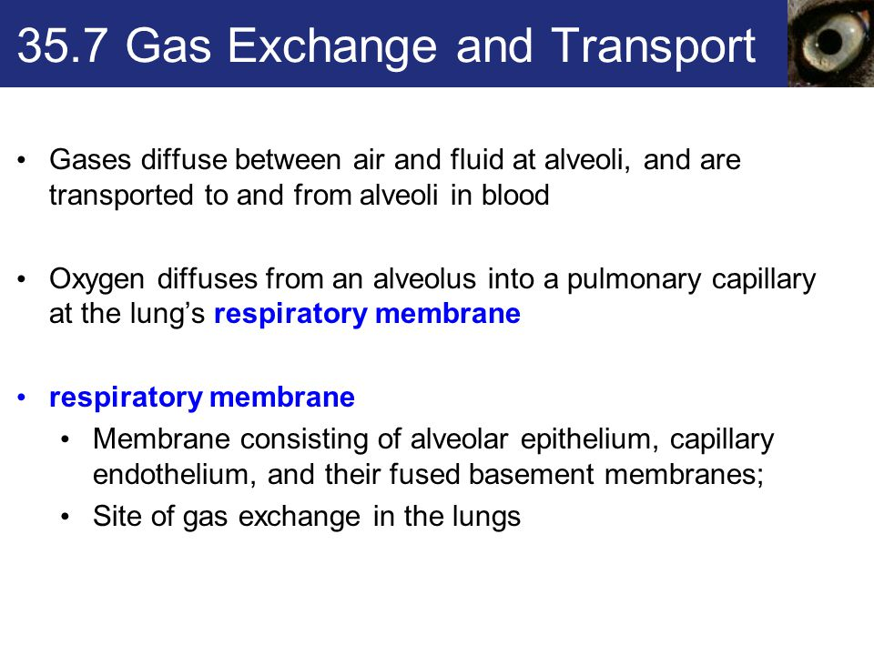 35.7 Gas Exchange and Transport