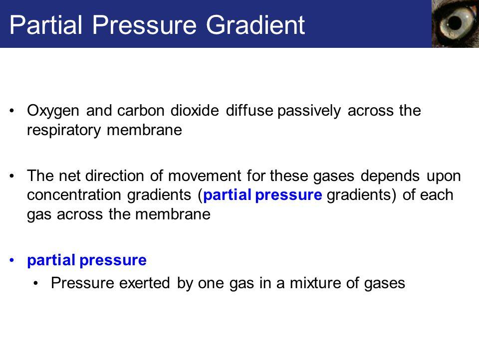 Partial Pressure Gradient