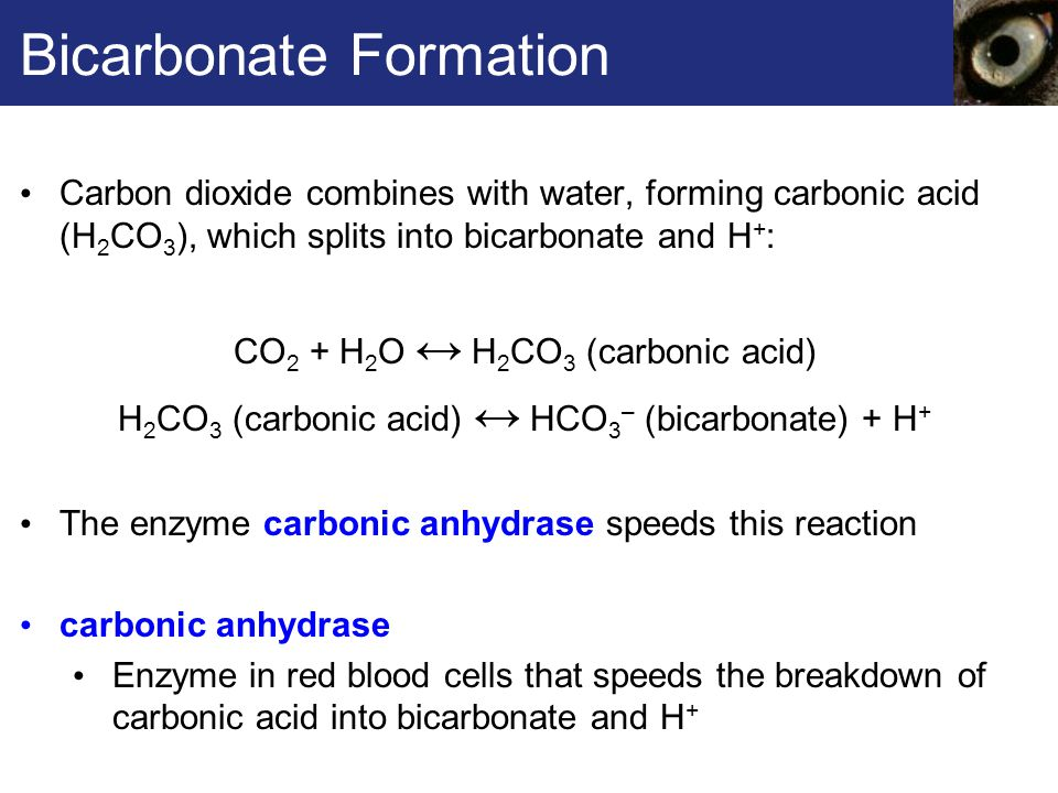 Bicarbonate Formation