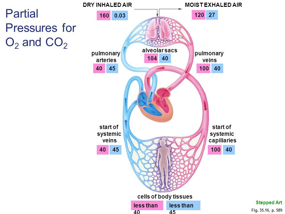 Partial Pressures for O2 and CO2