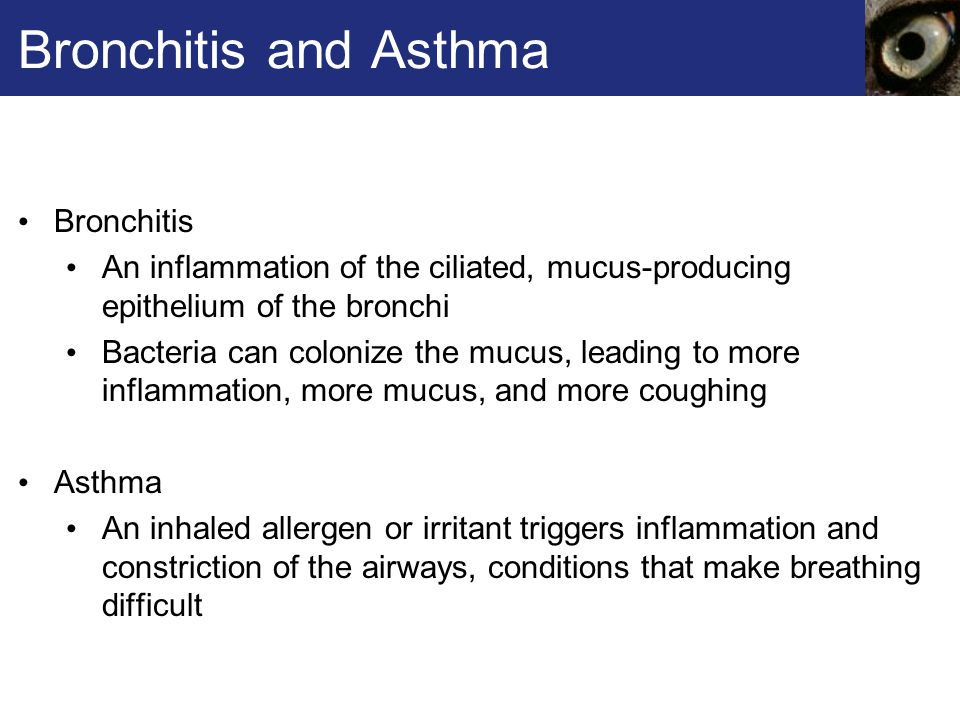 Bronchitis and Asthma Bronchitis