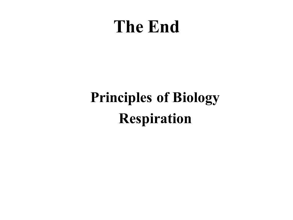 Principles of Biology Respiration