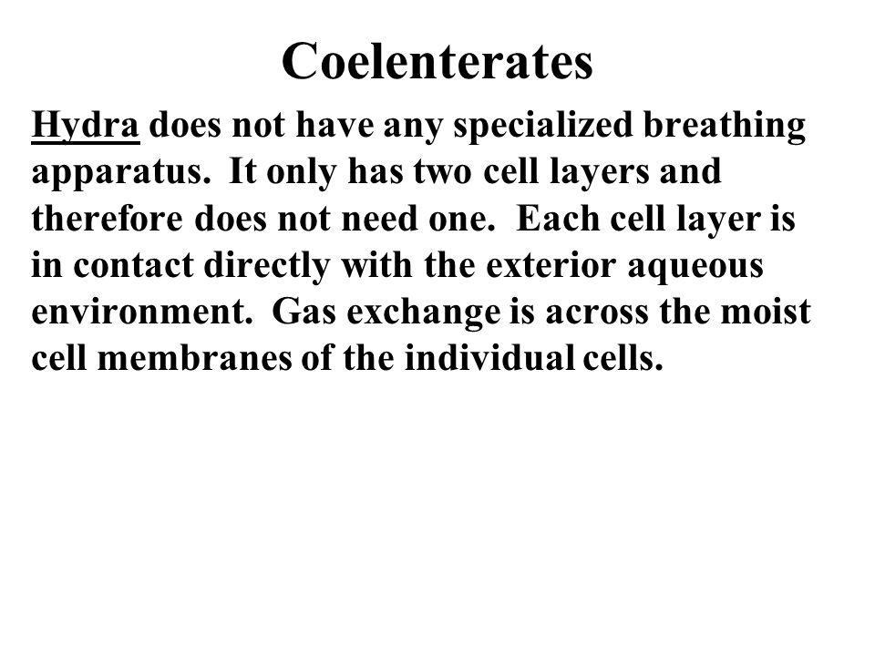 Coelenterates