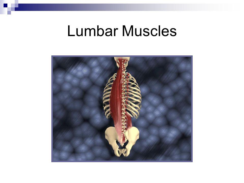 Lumbar Muscles
