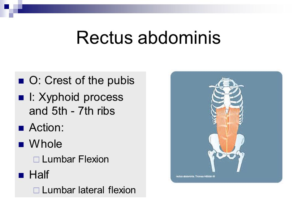 Rectus abdominis O: Crest of the pubis