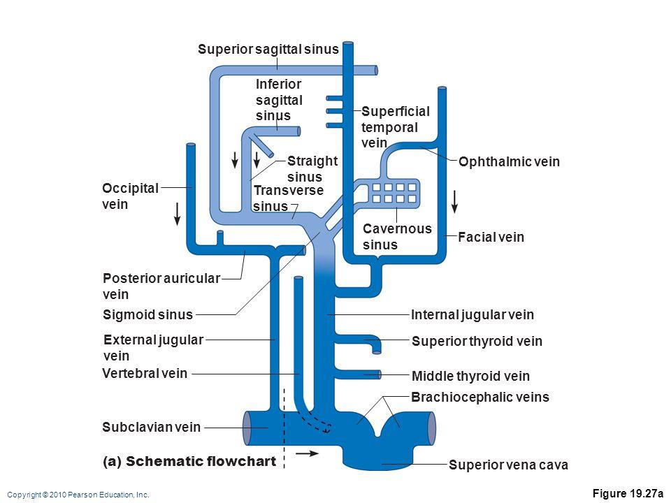 Superior sagittal sinus