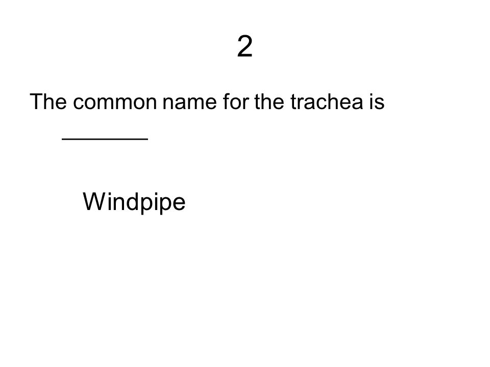 2 The common name for the trachea is _______ Windpipe