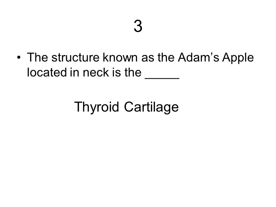 3 The structure known as the Adam's Apple located in neck is the _____ Thyroid Cartilage