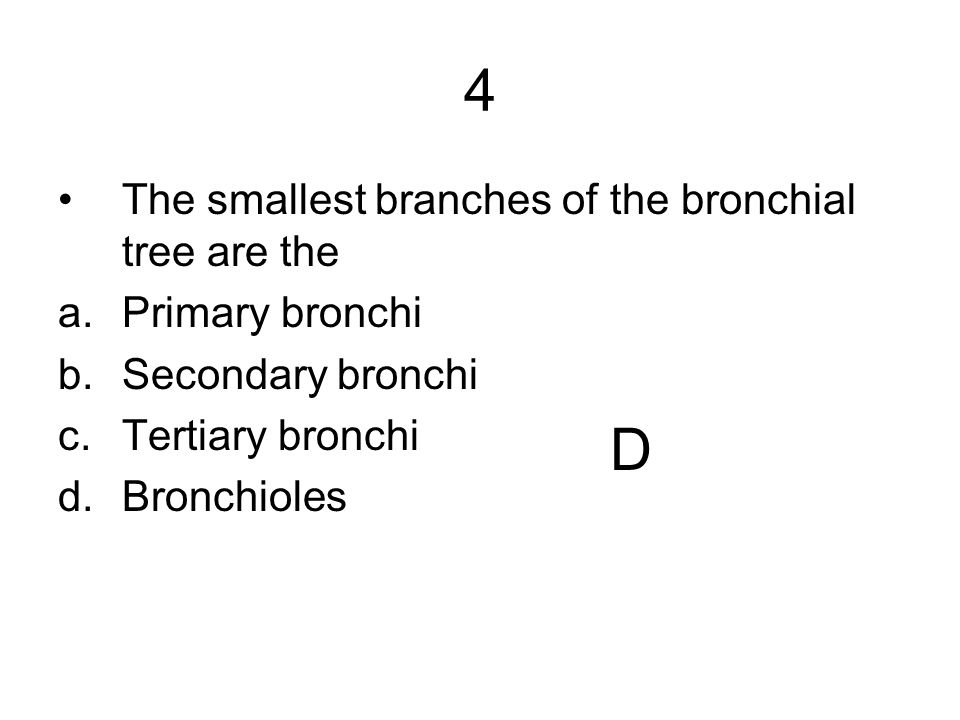 4 D The smallest branches of the bronchial tree are the
