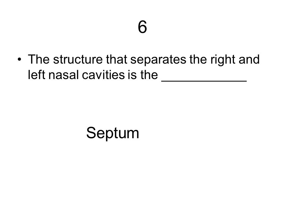 6 The structure that separates the right and left nasal cavities is the ____________ Septum