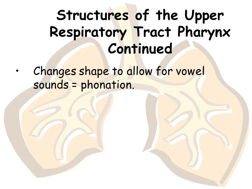 Structures of the Upper Respiratory Tract Pharynx Continued