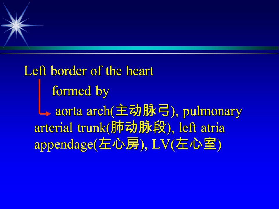 Left border of the heart