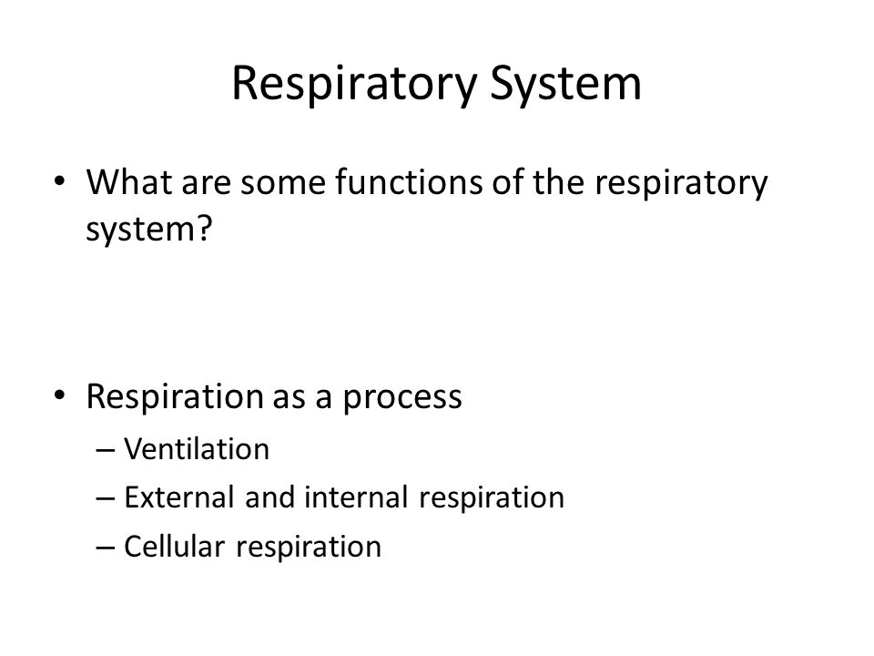 Respiratory System What are some functions of the respiratory system