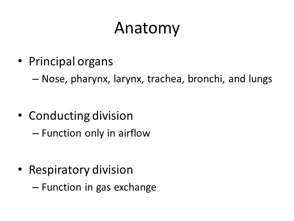 Anatomy Principal organs Conducting division Respiratory division