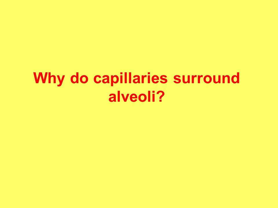 Why do capillaries surround alveoli