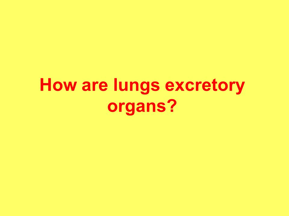 How are lungs excretory organs