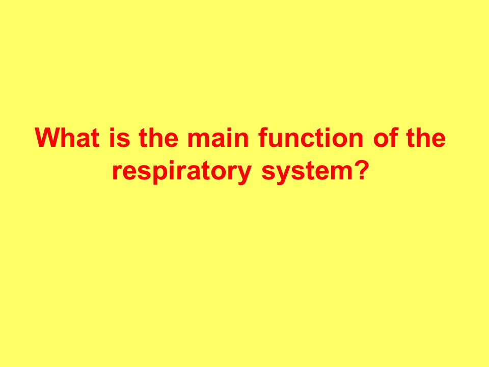 What is the main function of the respiratory system
