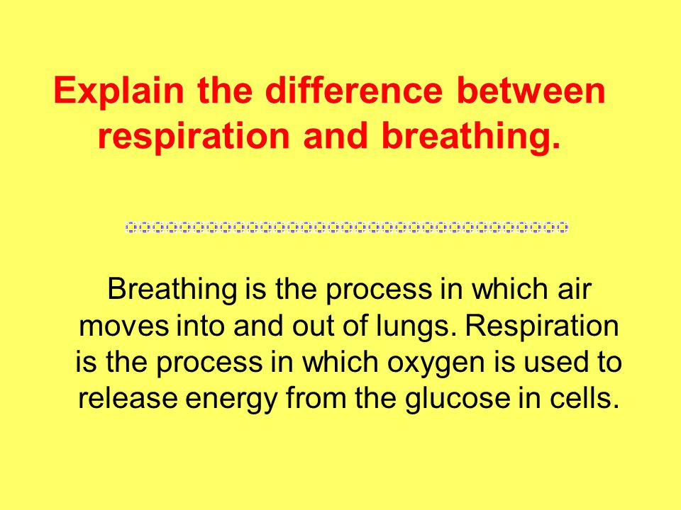 Explain the difference between respiration and breathing.
