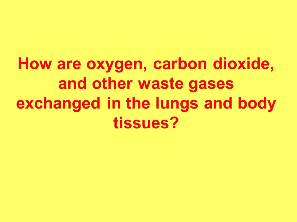 How are oxygen, carbon dioxide, and other waste gases exchanged in the lungs and body tissues
