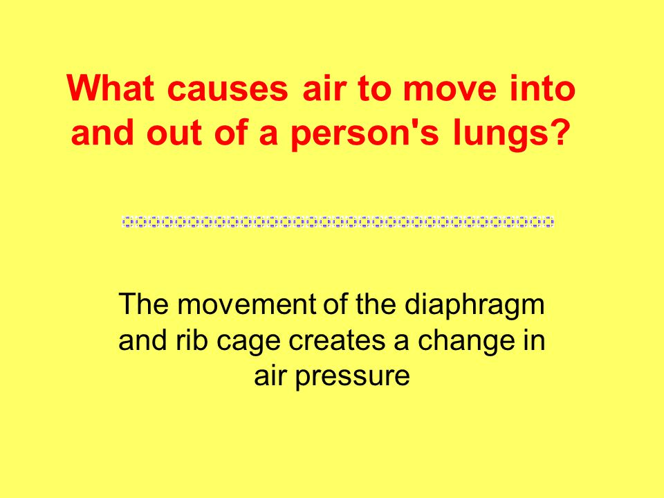 What causes air to move into and out of a person s lungs