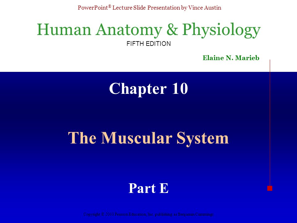 Chapter 10 The Muscular System Part E