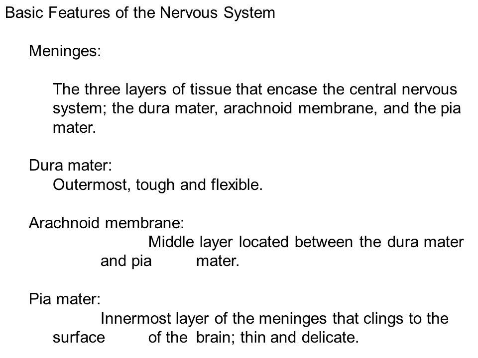 Basic Features of the Nervous System