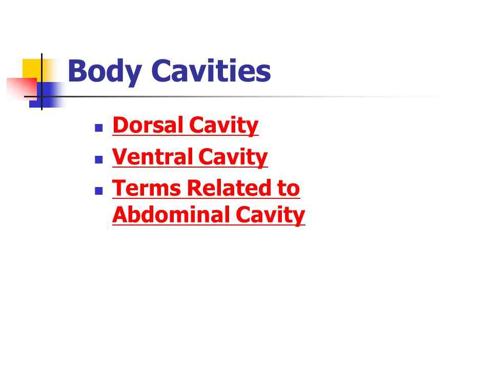 Body Cavities Dorsal Cavity Ventral Cavity