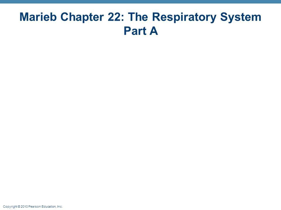 Marieb Chapter 22: The Respiratory System Part A