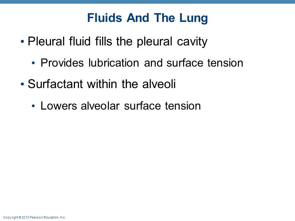 Pleural fluid fills the pleural cavity