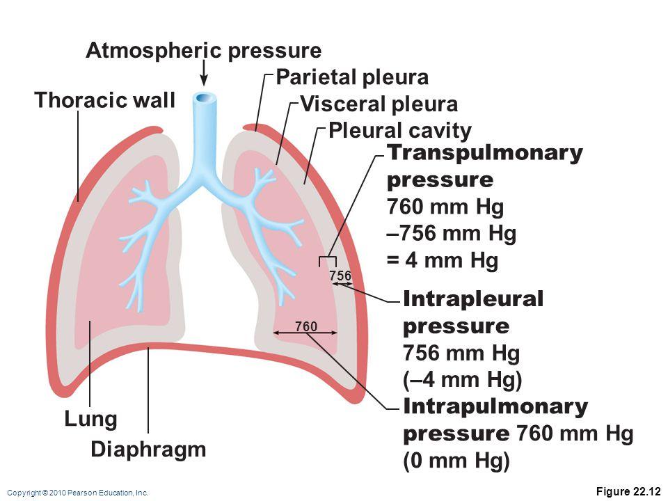 Atmospheric pressure Parietal pleura Thoracic wall Visceral pleura
