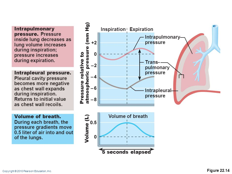 inside lung decreases as lung volume increases during inspiration;